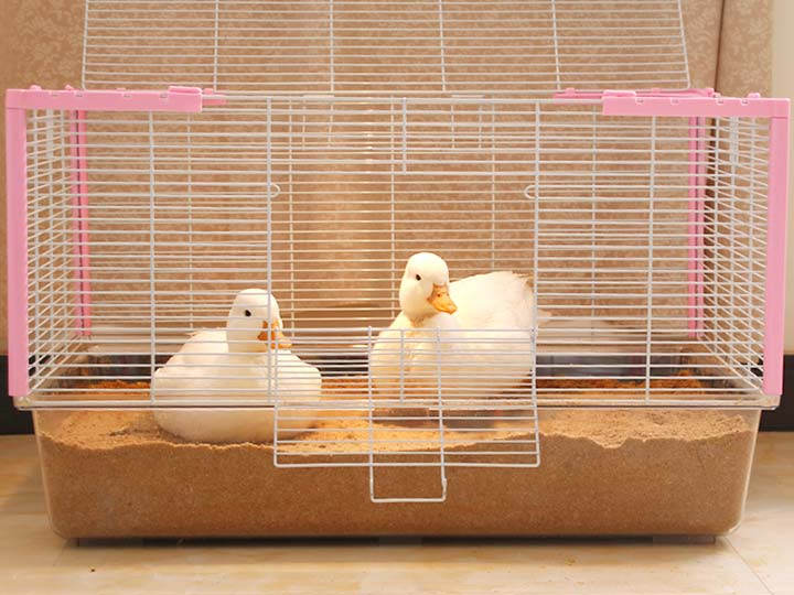 duck bedding with wood shavings