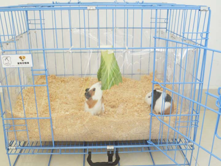 pets bedding with wood shavings