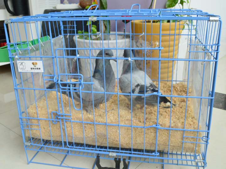 pigeon bedding with wood shavings