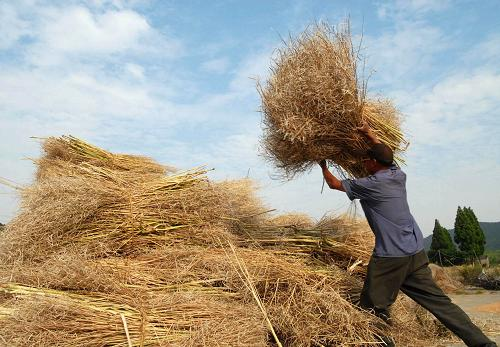 straw for processing