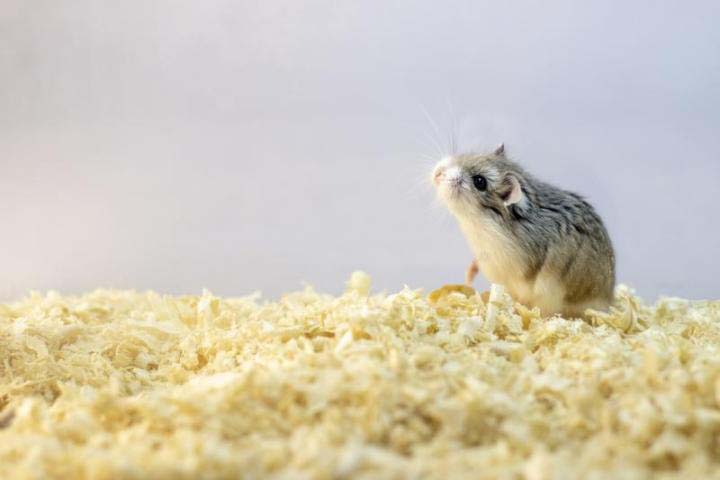 wood shavings for animal bedding