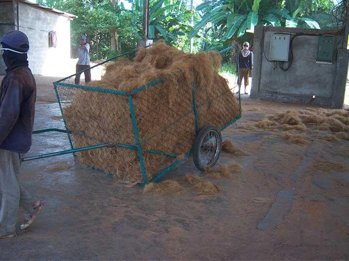 processed coconut coir fiber