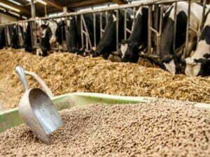 feed pellets in the cattle farm