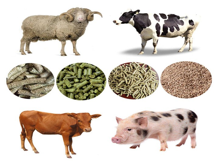 poultry feed pellet applications